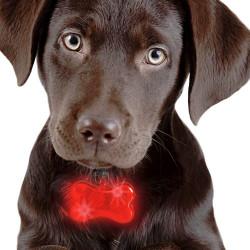 Colgante LED para Perros