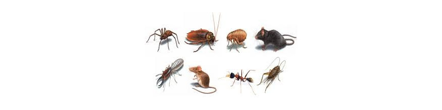 ANTI INSECTOS
